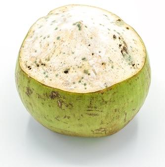 Schimmelige kokosnuss lokalisiert auf weißem hintergrund