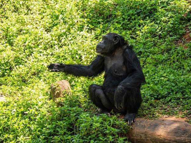 Schimpansen sind sehr intelligente tiere