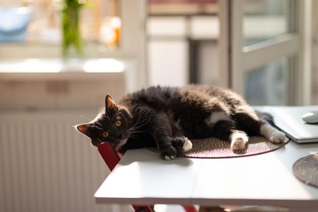 Schläfrige flauschige schwarze katze mit überraschten augen ruht auf dem küchentisch, bis die besitzer sehen.