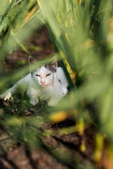 Schläfrige katze, die auf dem boden liegt