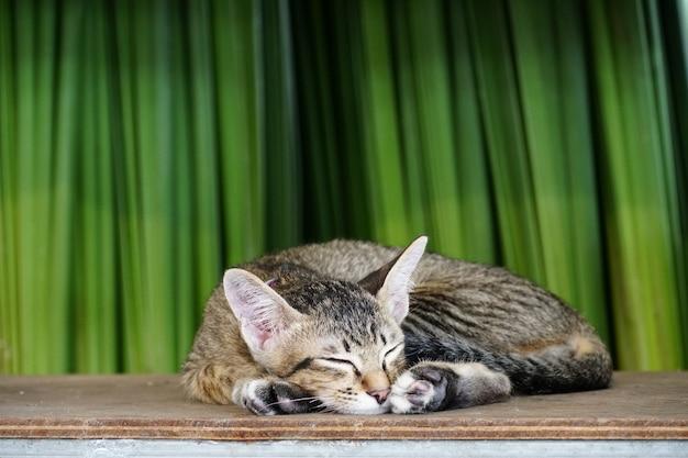 Schlaf der kleinen katze auf der hölzernen planke