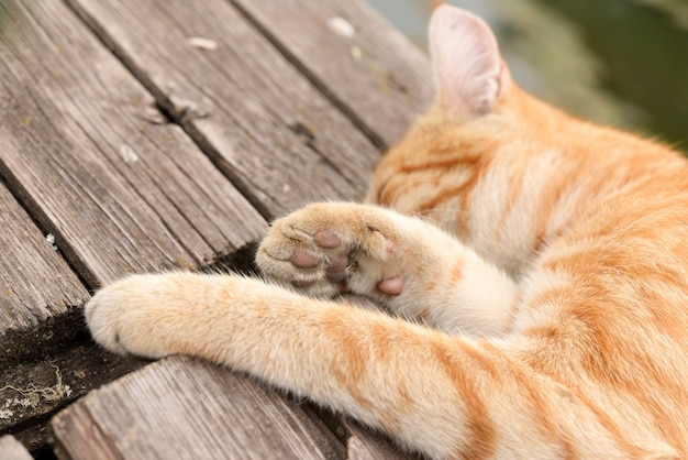 Schlafende katze auf hölzernem am warmen sommertag, nahaufnahme