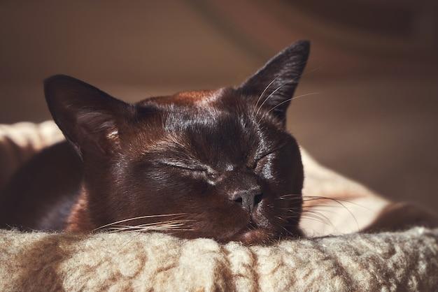 Schlafende katze in den strahlen der sonne