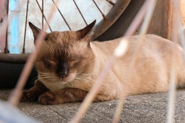 Schlafende katze mit abschluss oben
