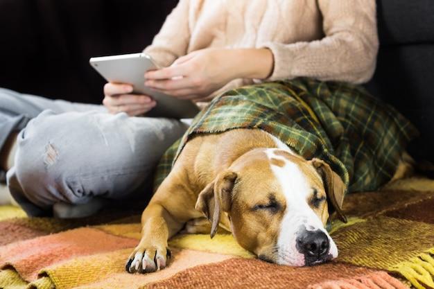 Schlafender hund mit lesendem menschen