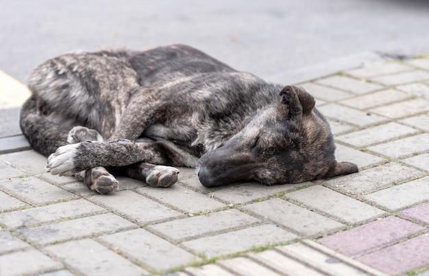 Schlafender verlassener hund in einer straße