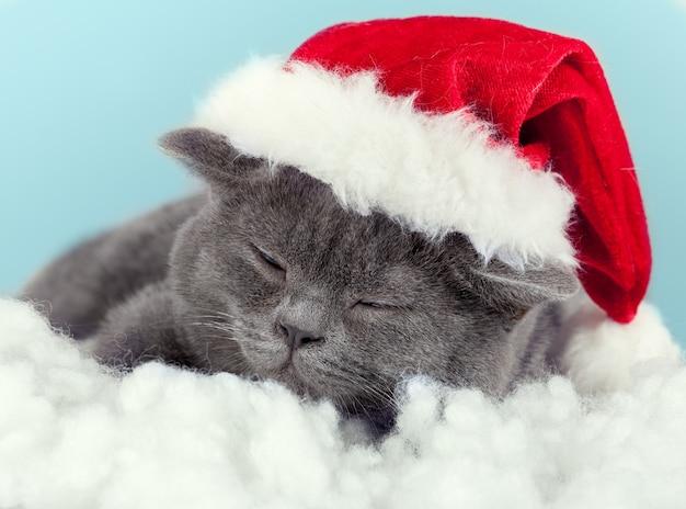Schlafendes kleines kätzchen mit weihnachtsmütze