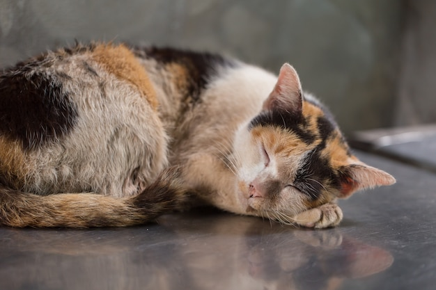 Schlafenkätzchen schmutziges obdachloses kätzchen verhungern schmutziger unreiner marktplatz der streukatze.