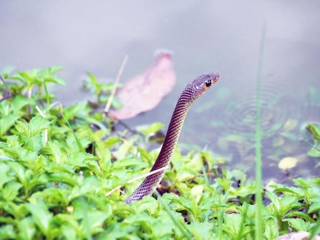 Schlange in freier wildbahn