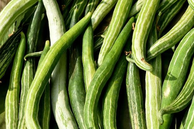 Schlangenkürbis oder trichdsanthes cucumerina grüne früchte auf naturhintergrund.