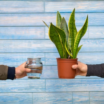 Schlangenpflanze und wasserflasche mit blauem hintergrund