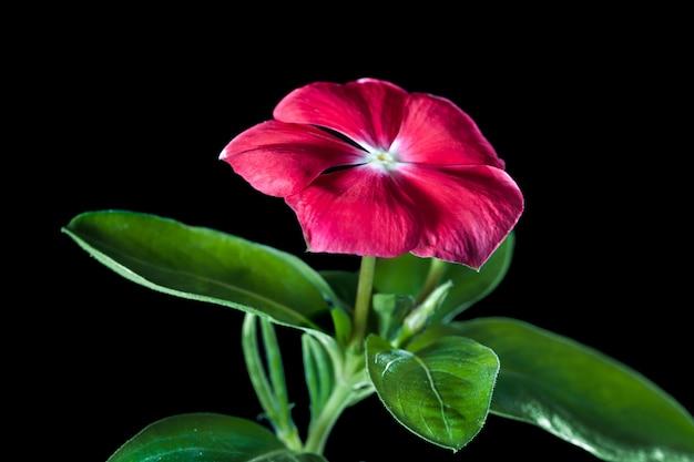 Schließen sie bis zum blumen- und pflanzenrosa blured grün