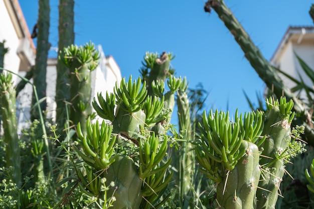 Schließen sie den kaktus für details und textur