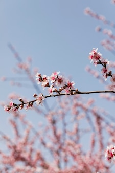 Schließen sie die zweige der bäume mit blühenden blumen