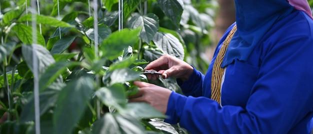 Schließen sie herauf ansicht der gärtnerhände, die grüne pflanzen mit schnittschere beschneiden