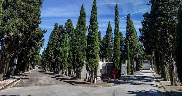 Schließen sie herauf ansicht eines abschnitts vom berühmten portugiesischen friedhof prazeres in lissabon, portugal.