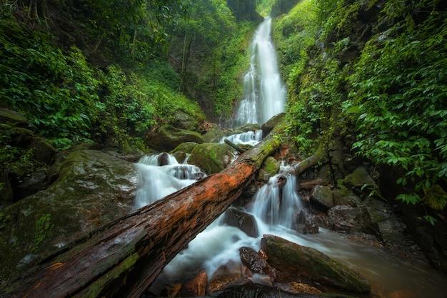 Schließen sie herauf ansichtwasserfall im tiefen wald am nationalpark, wasserfallflussszene.