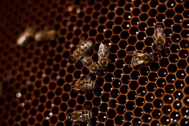 Schließen sie herauf bienenwabe im hölzernen bienenstock mit bienen auf ihr. imkerei.