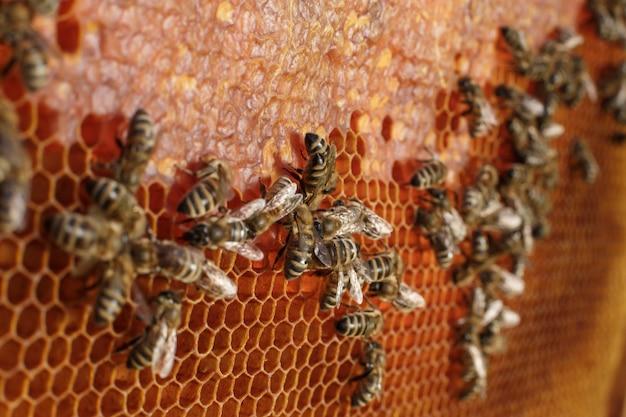 Schließen sie herauf bienenwabe im holzrahmen mit bienen auf ihr. imkerei.