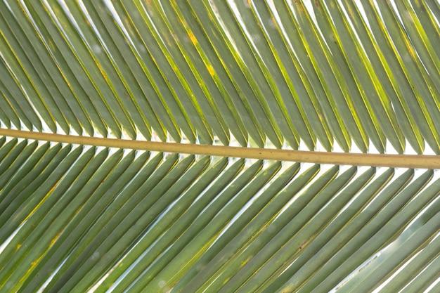 Schließen sie herauf blätter einer kokosnusspalme