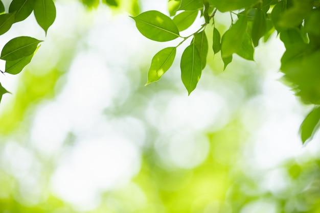 Schließen sie herauf des grünen blattes der schönen naturansicht auf unscharfem grünhintergrund unter sonnenlicht