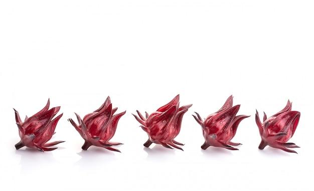 Schließen sie herauf die frische rote roselle-atelieraufnahme, die auf weiß lokalisiert wird