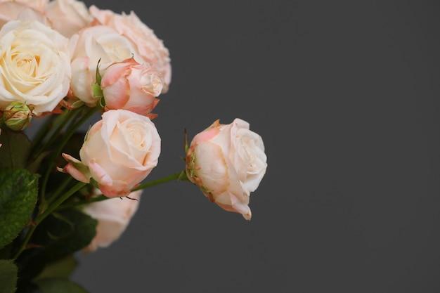 Schließen sie herauf die frischen rosa rosenblumen, die auf grauem hintergrund lokalisiert werden. kopieren sie platz. frauentag