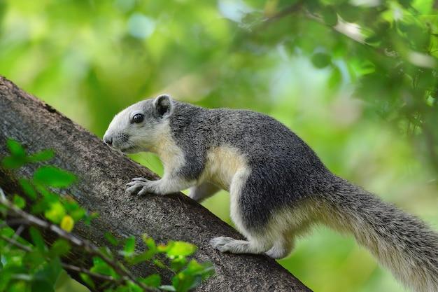 Schließen sie herauf eichhörnchen auf zweig- und grünblatthintergrund