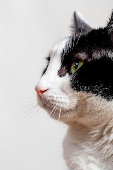 Schließen sie herauf entzückende katze mit weißem hintergrund