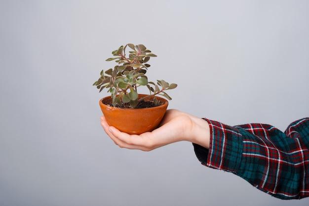 Schließen sie herauf foto der frauenhand, die eine pflanze über weißer wand hält