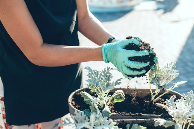 Schließen sie herauf foto einer kaukasischen frau, die einige pflanzen in topf mit handschuhen pflanzt