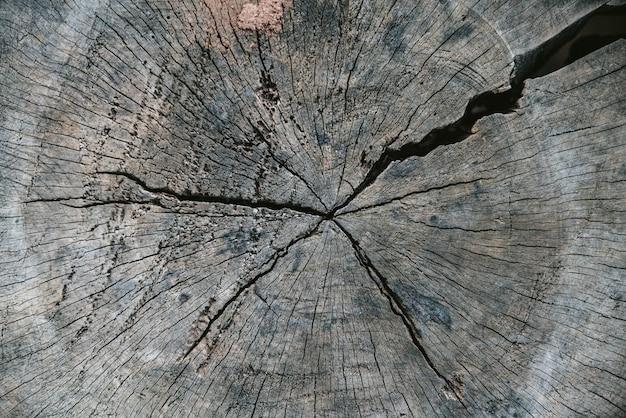 Schließen sie herauf geschnittenen baumstamm mit altem sprung im akha-dorf von maejantai auf dem hügel in chiang mai