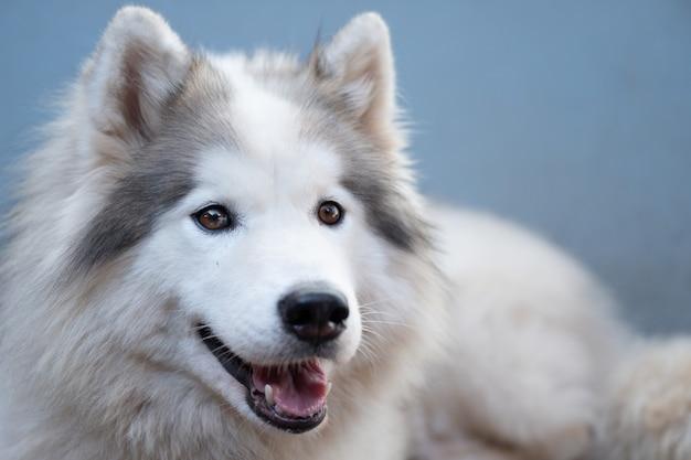 Schließen sie herauf glücklichen weißen hund, der schläft