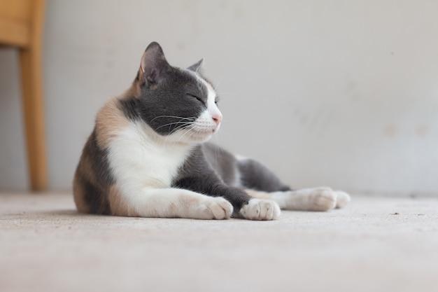 Schließen sie herauf graue katze der getigerten katze, auf boden zu bleiben.