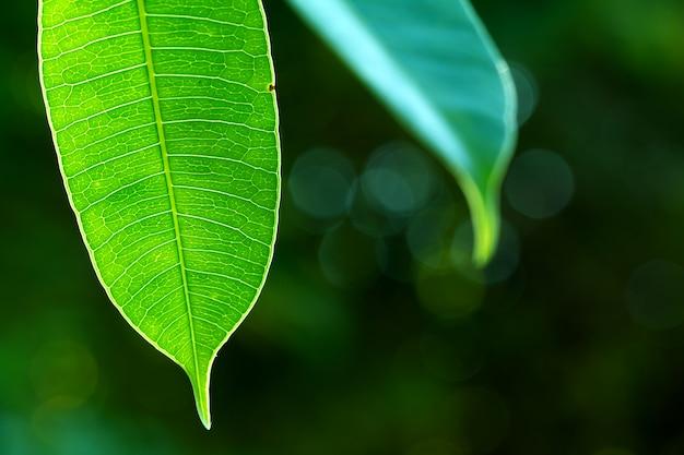 Schließen sie herauf grünblätter auf dem grün unscharfen hintergrund