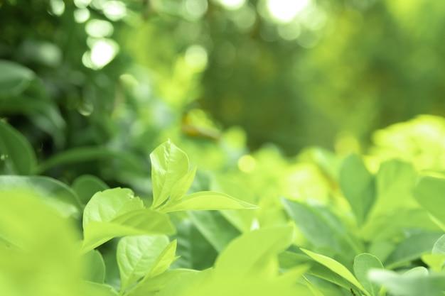 Schließen sie herauf grüne blätter der grünen natur der ansichtbeschaffenheit unscharfen hintergrund im park, im garten oder im wald. gebrauch, in leeren raum auf grünem naturhintergrund zu schreiben oder zu kopieren.