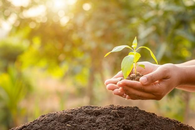 Schließen sie herauf hand, die jungen grünen baumspross hält und in erde pflanzt