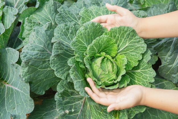 Schließen sie herauf handlandwirt im garten während des morgenzeit-lebensmittelhintergrundes