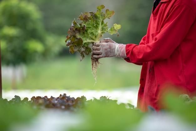Schließen sie herauf handlandwirt im wasserkulturgarten während der morgenzeit