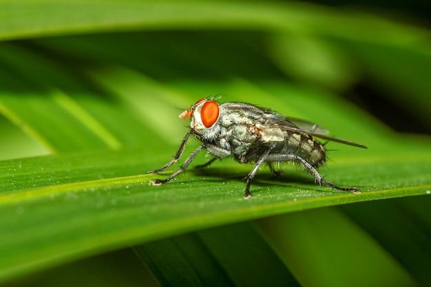 Schließen sie herauf insektengrün-fliegenmakro auf blatt in der natur
