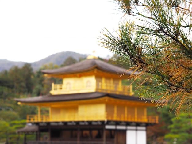 Schließen sie herauf kieferblattbaum über unscharfem hintergrund der goldene pavillon kinkakuji-tempel in kyoto, japan.