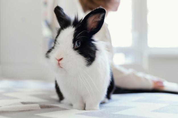 Schließen sie herauf kind mit niedlichem kaninchen