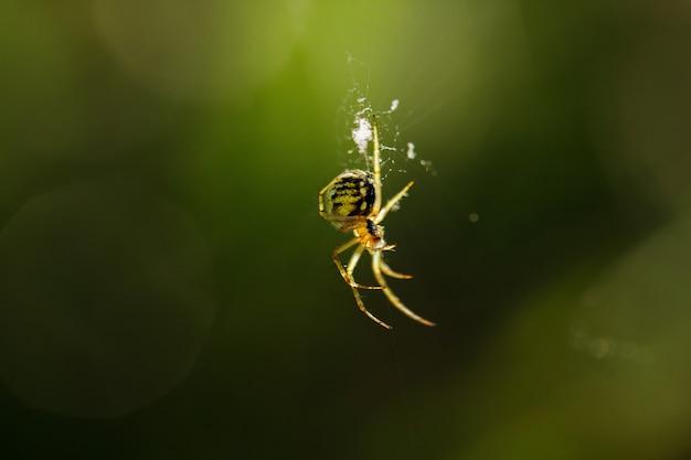 Schließen sie herauf makroschuss von insekten in der garde, frühlingstiere