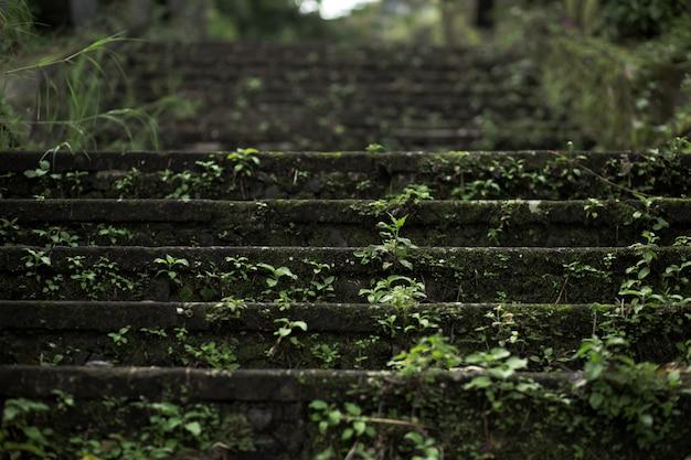 Schließen sie herauf moostreppe des steins im balinesse tempel