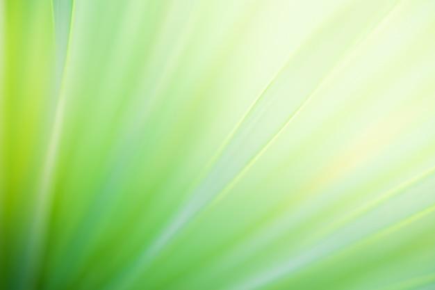 Schließen sie herauf natürliche ansicht des grünen blattes unscharfen hintergrund mit sonnenlichtgebrauch für hintergrund