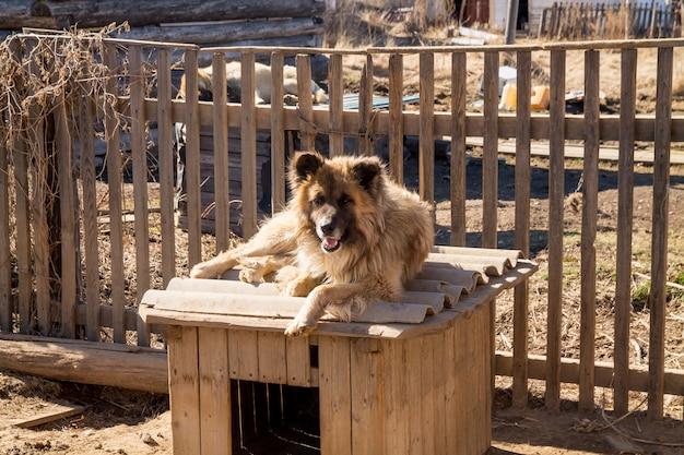 Schließen sie herauf porträt des blonden großen landhundes, der auf dem dach seiner hundehütte mit einem hölzernen zaun liegt