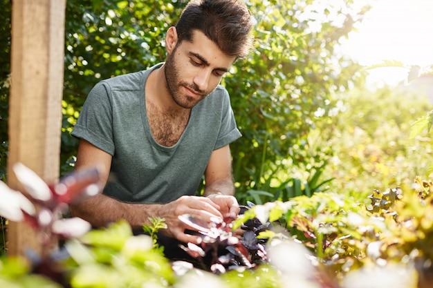 Schließen sie herauf porträt des jungen gutaussehenden kaukasischen mannes im blauen t-shirt konzentriert, das in seinem ländlichen garten am heißen sommertag arbeitet. gärtner verbringt den tag damit, gemüse anzupflanzen.