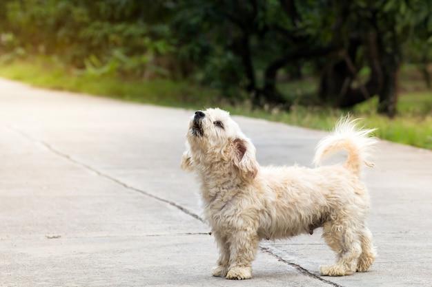 Schließen sie herauf porträt eines streunenden hundes auf seitenweg