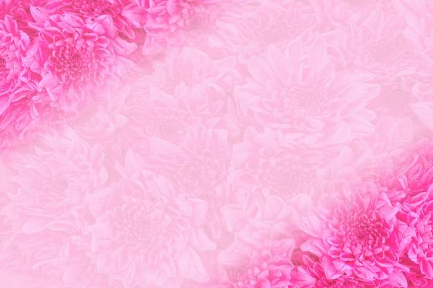Schließen sie herauf rosarose blüht hintergrund