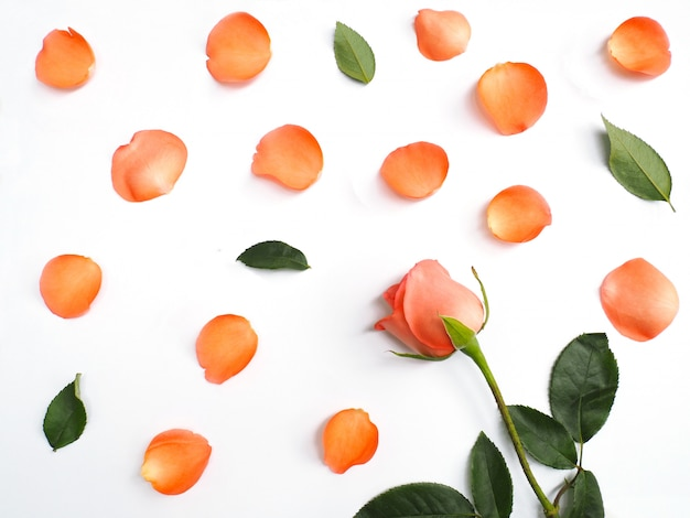 Schließen sie herauf rosen mit den blumenblättern und grünblättern auf weiß